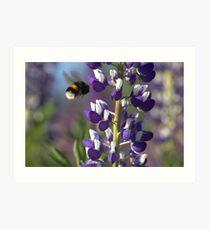 Lupin and Bumblebee  Art Print