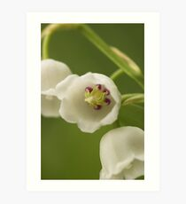 Lilly-of-the-Valley Macro  Art Print