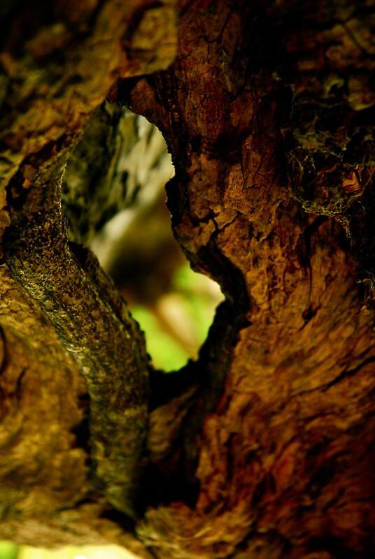 Treescape II by Bojoura Stolz