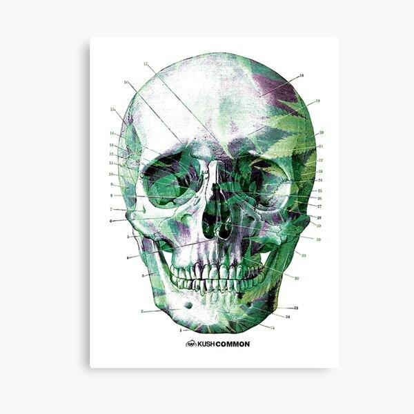 Pot Head Canvas Print
