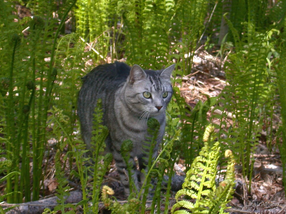 Jungle Cat by LifeInMaine