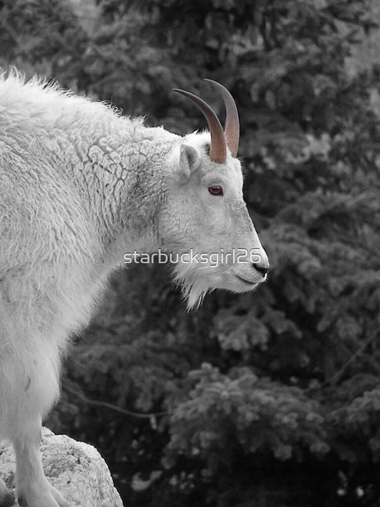 Goat on the mountain by starbucksgirl26