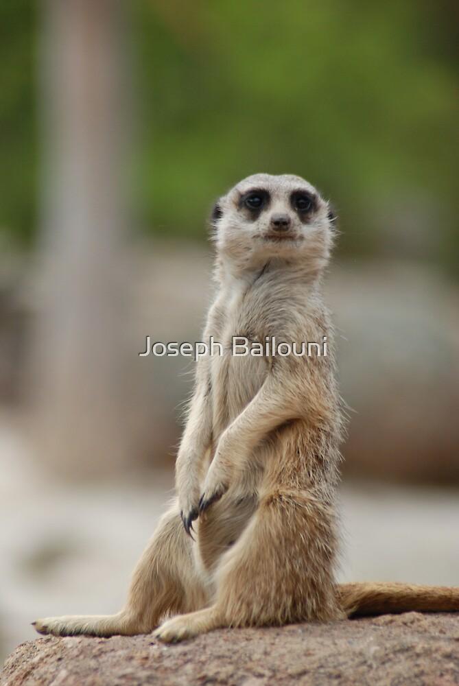 Meerkat by Joseph Bailouni