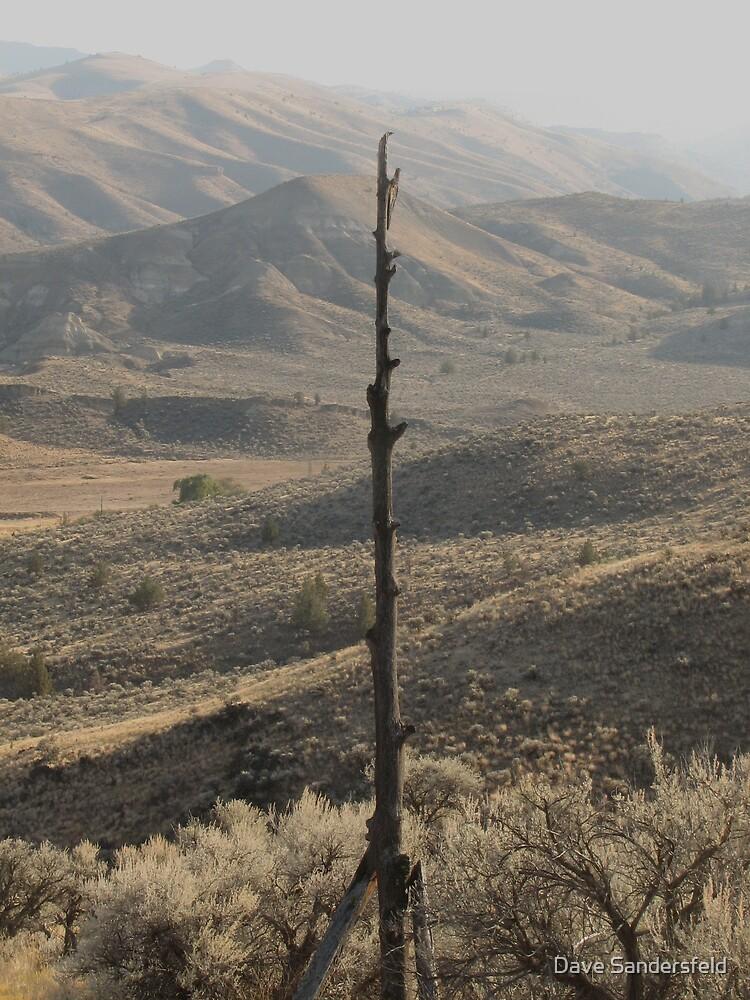 Old telephone line by Dave Sandersfeld
