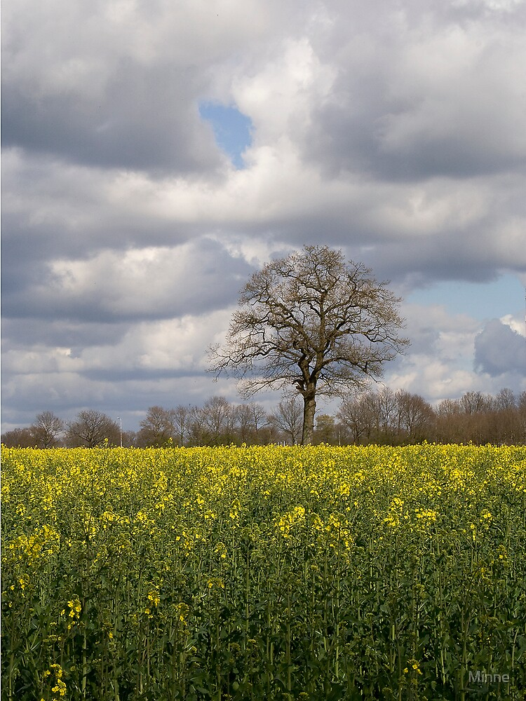 Oilseed rape by Minne