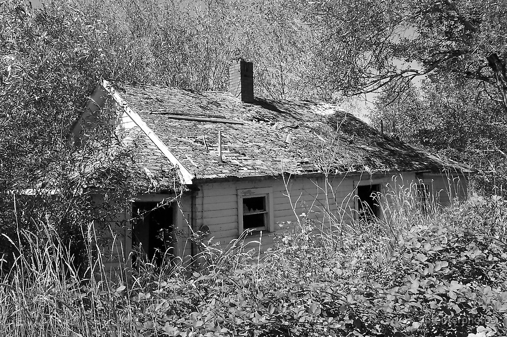 House in the Bog by pfeifferphotos