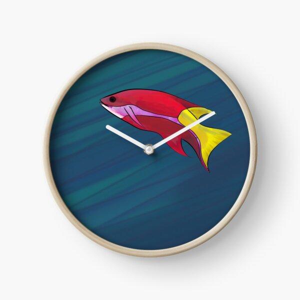 Cuban Hogfish in the Ocean Clock