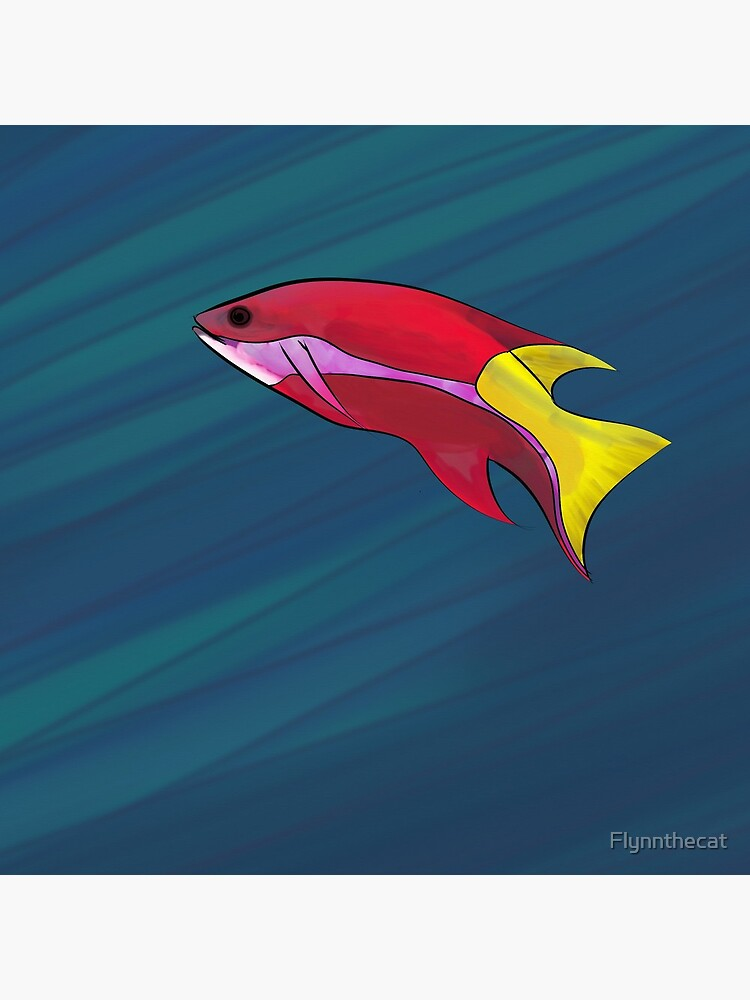 Cuban Hogfish in the Ocean by Flynnthecat
