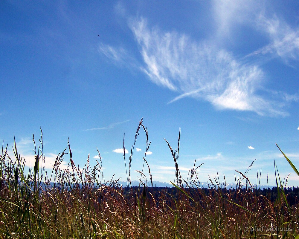 Grassland by pfeifferphotos