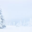 Lapland Trees (Pyha, Finland) by George Wheelhouse
