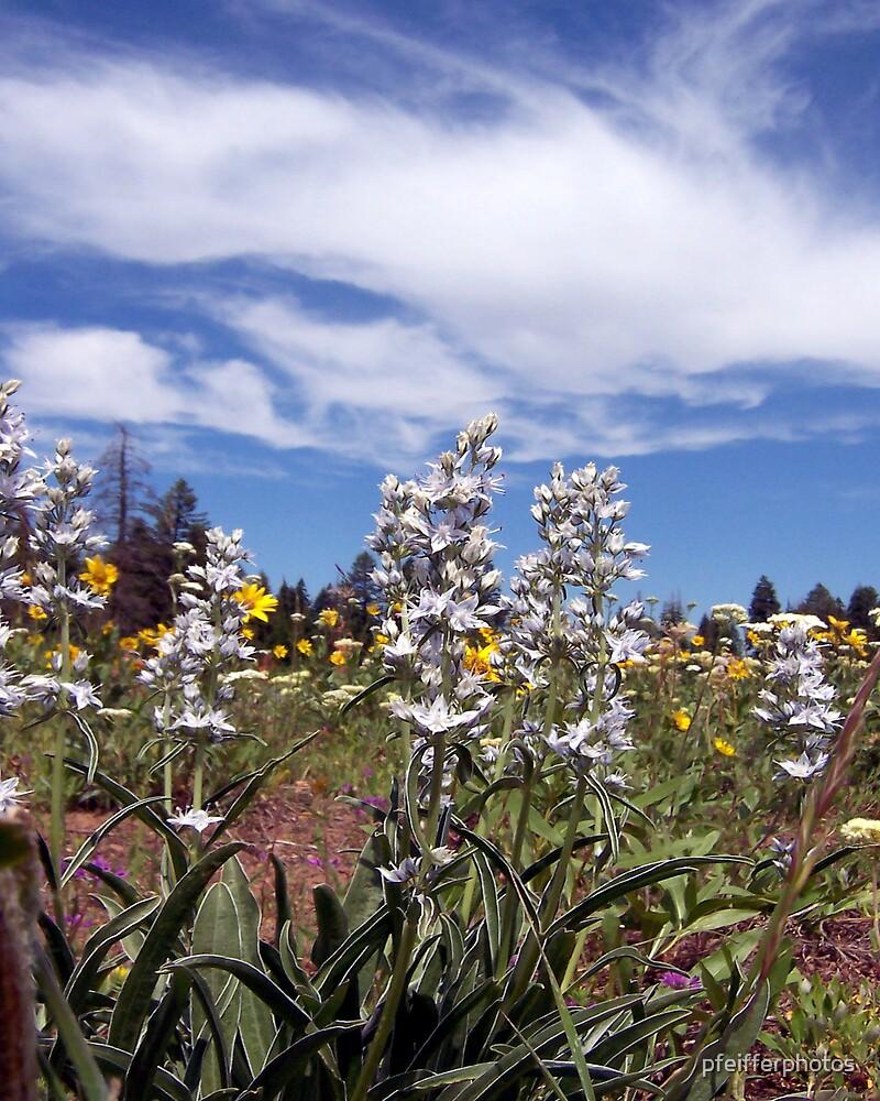 Wildflowers by pfeifferphotos