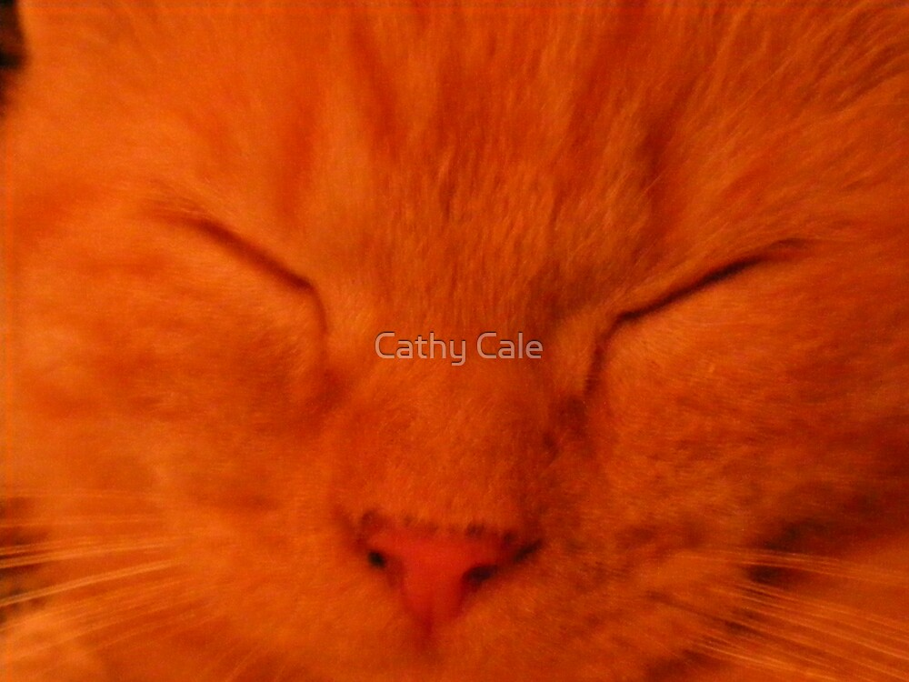 Sleeping Ollie Kitten(Orange) by Cathy Cale