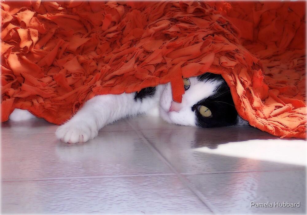 Peek  A Boo by Pamela Hubbard
