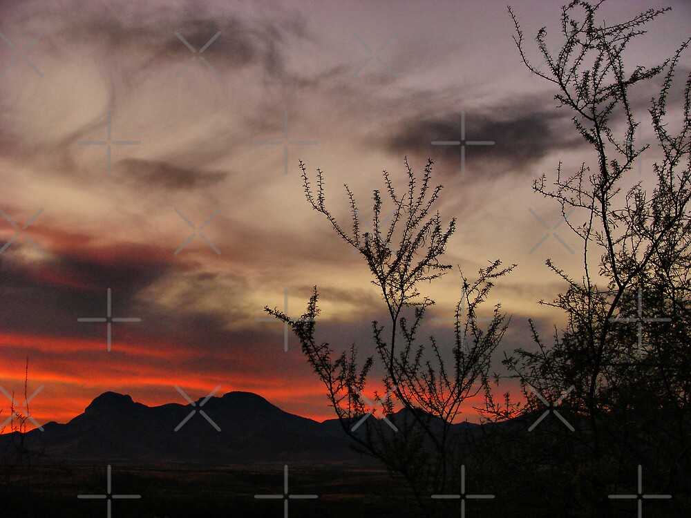 Sunset Silhouette 4 by Kimberly Miller