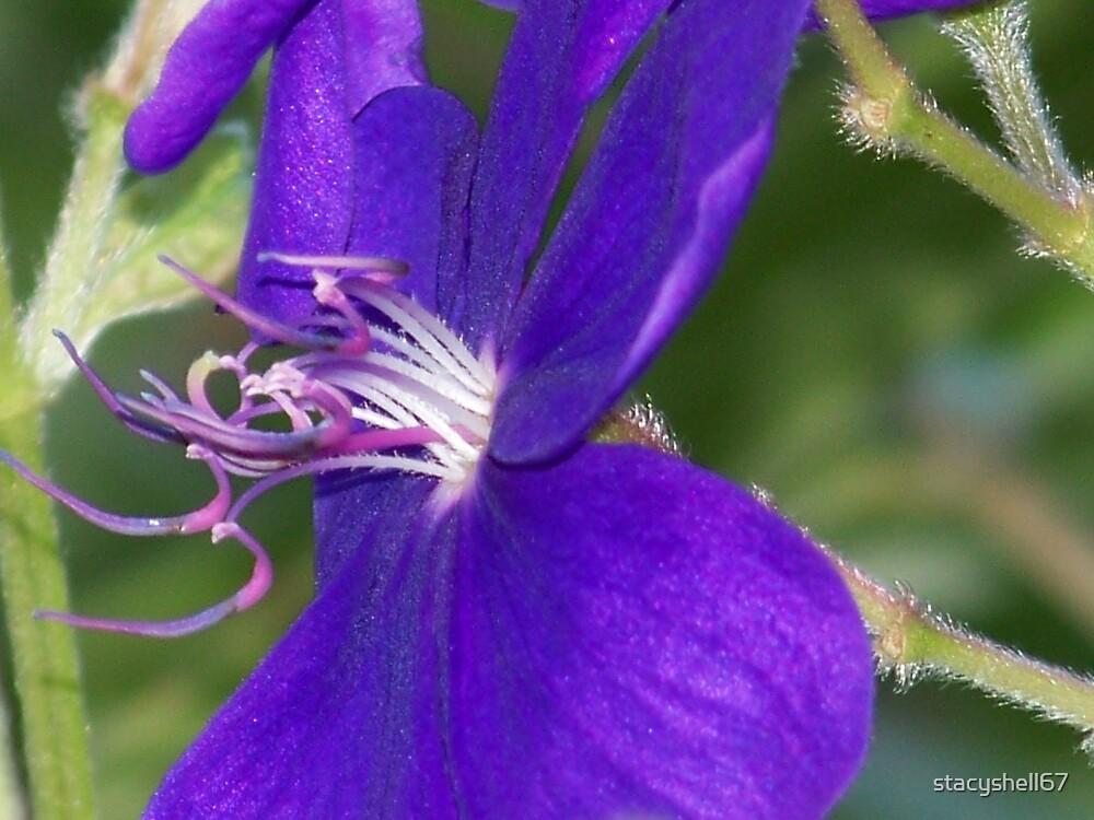 Purple Princess by stacyshell67
