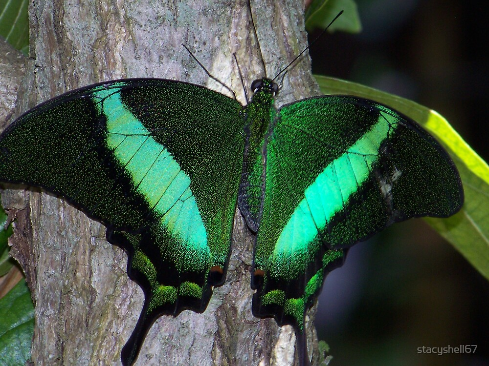 Groovy Green by stacyshell67