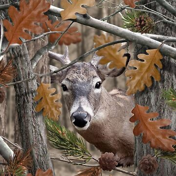THE HUNTSMAN COLLECTION - Autumn Deer  by stuph4kewlkidz