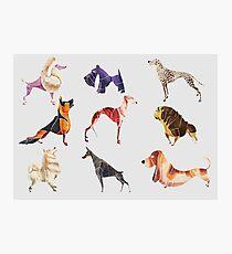 Dog breeds  Photographic Print