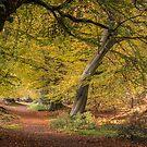 Autumn Arrives by George Wheelhouse