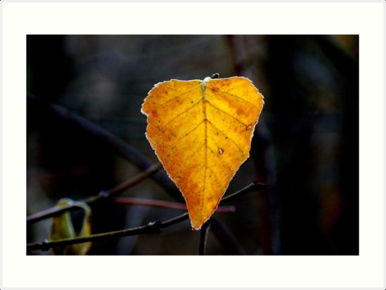 Frosty Leaf... by Larry Llewellyn