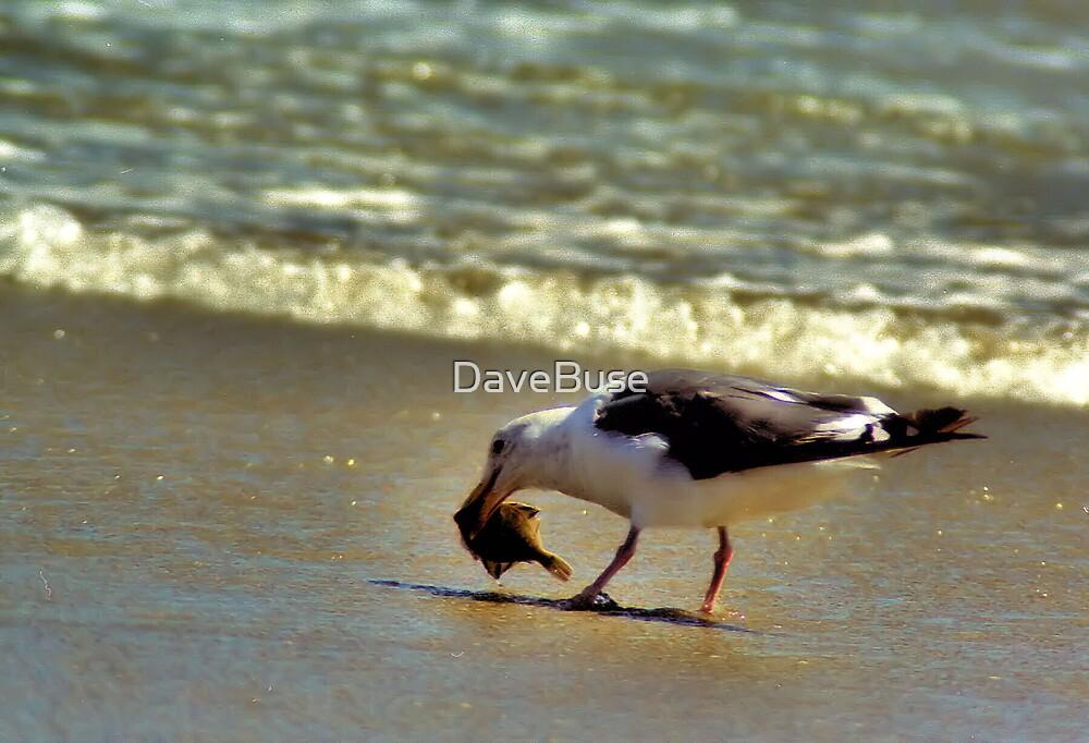 Sea Gull by DaveBuse