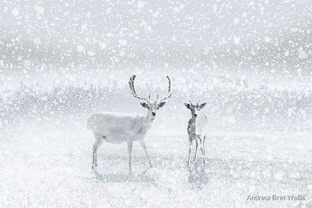 Winter Reindeer by Andrew Bret Wallis