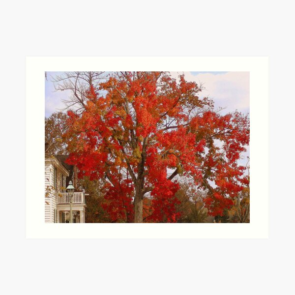 Firey Tree Art Print