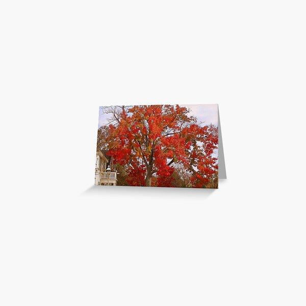 Firey Tree Greeting Card