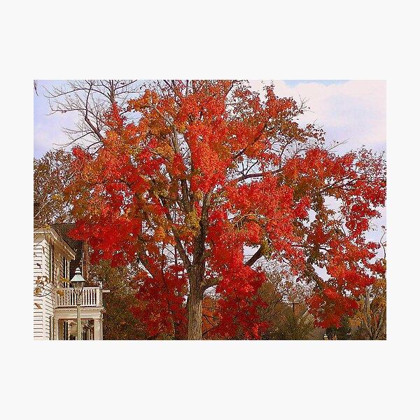 Firey Tree Photographic Print
