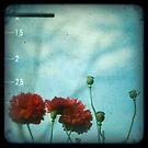 11 am by aglaia b