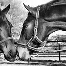 Equestrian friendship by BlaizerB