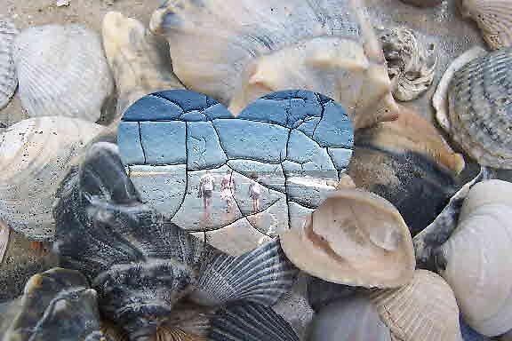 Broken Shells by Butterfly2008