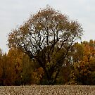 Surrounded by Autumn by RockyWalley
