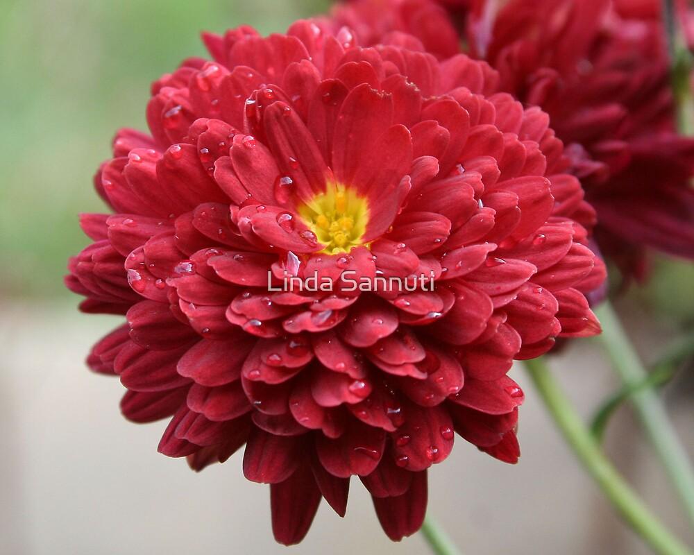 Full Bloom by Linda Sannuti