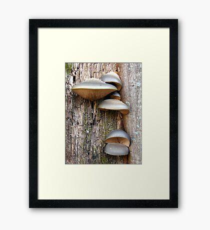 Unidentified Tree Fungi #2 Framed Print