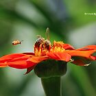 Bee Family by Stwayne