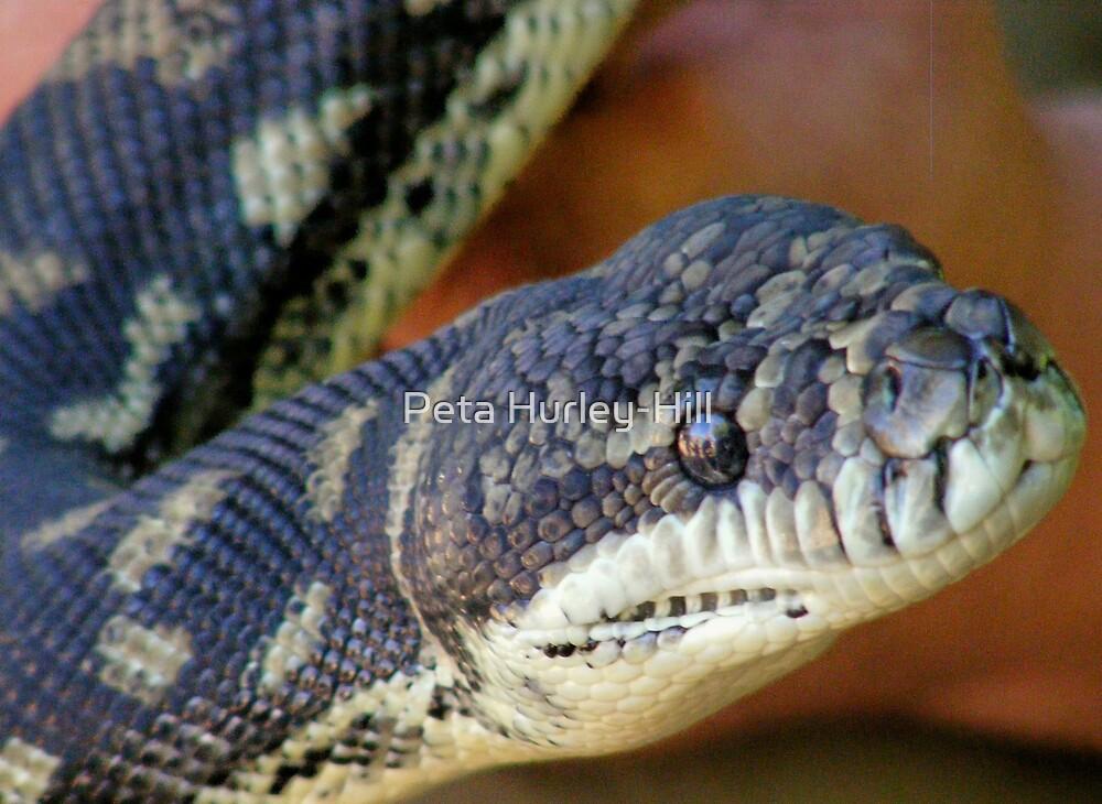 Carpet python by Peta Hurley-Hill