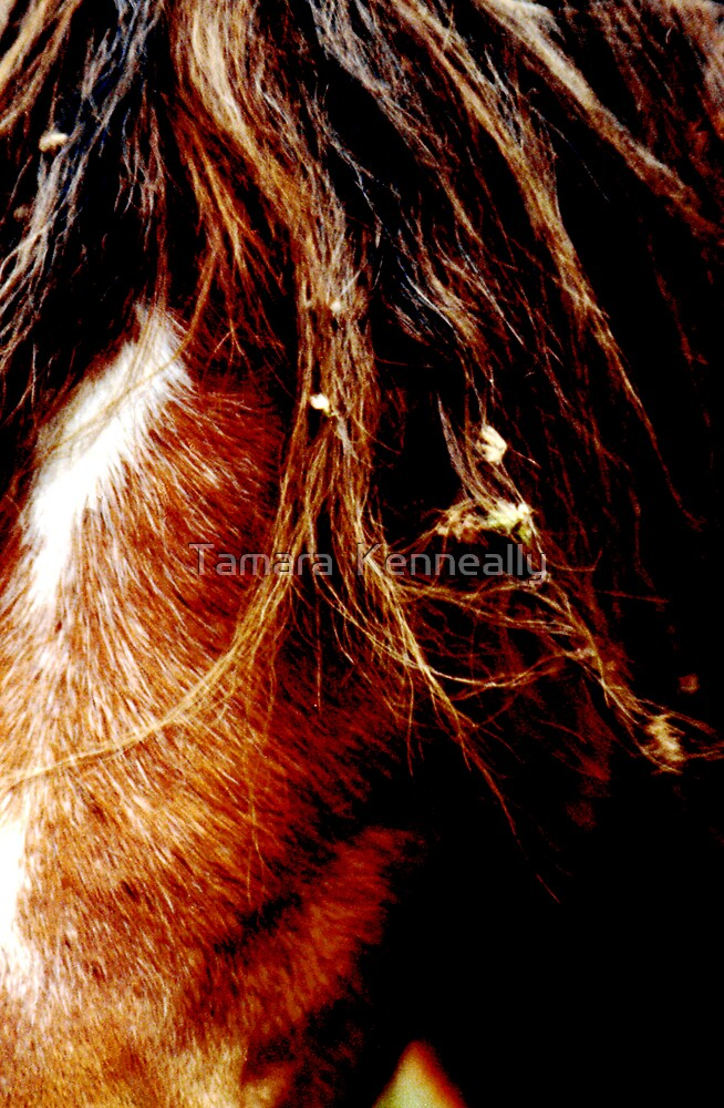 Pony by Tamara  Kenneally