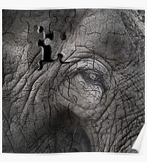 Save The Elephant Poster