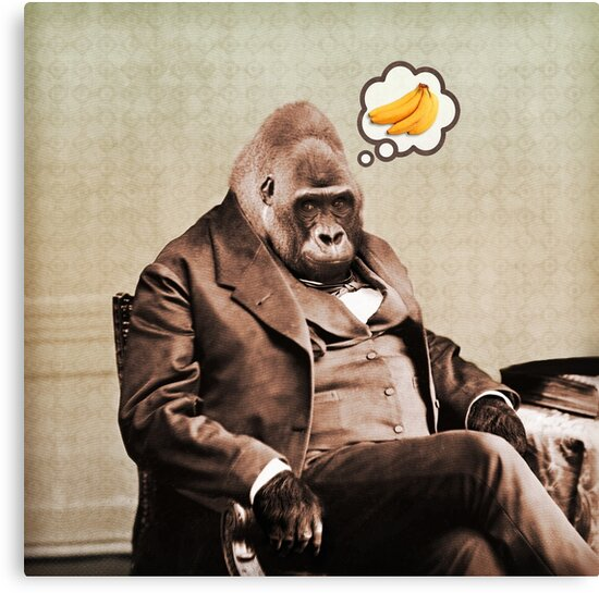 Gorilla My Dreams by PETER GROSS