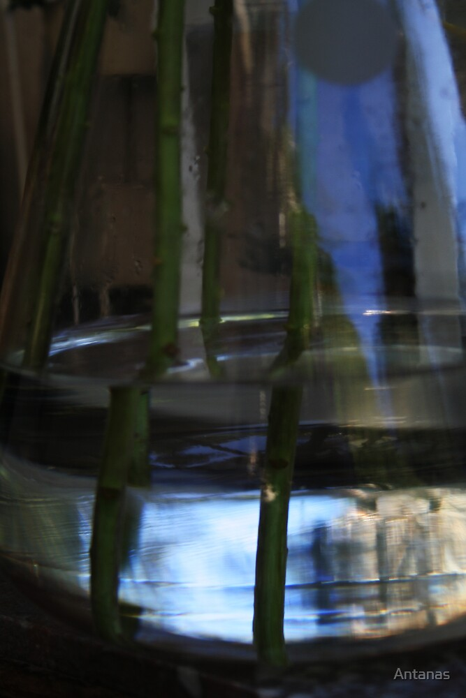 Water and Glass by Antanas