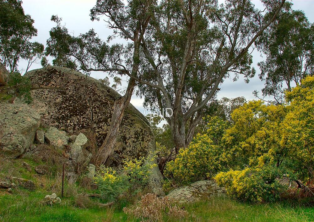 Australian Bush by GailD