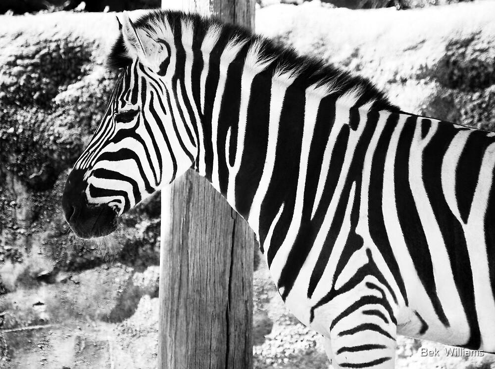 Zebra by Bek  Williams