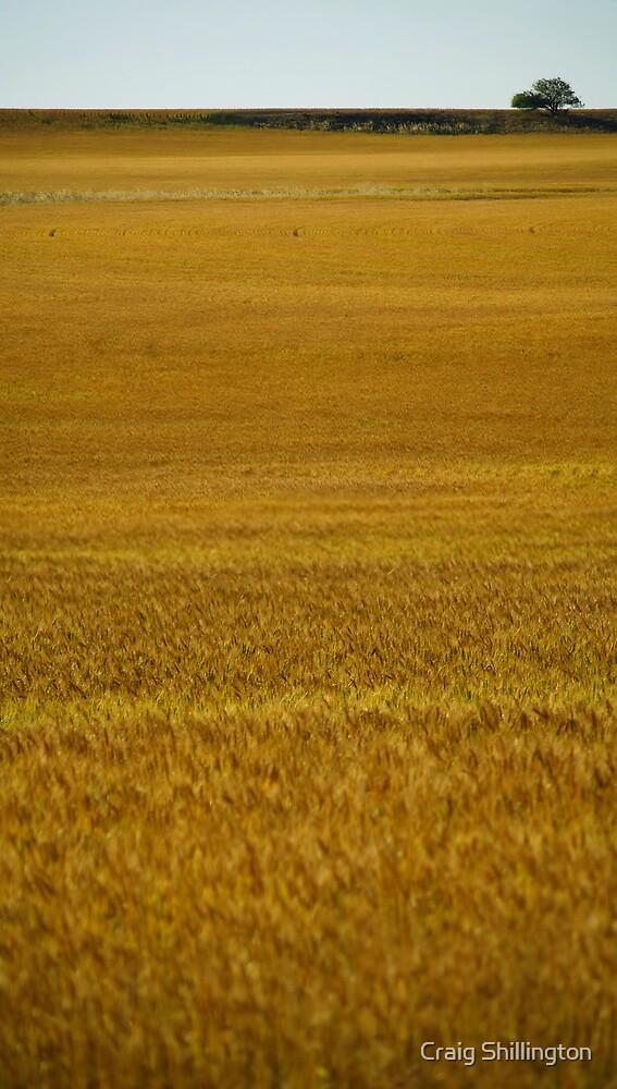 Hopes of Gold by Craig Shillington