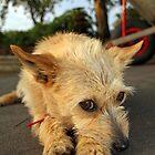 I Love my Dog by Brad Holton