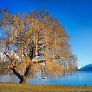 Lakeside tree. by Dave Hare
