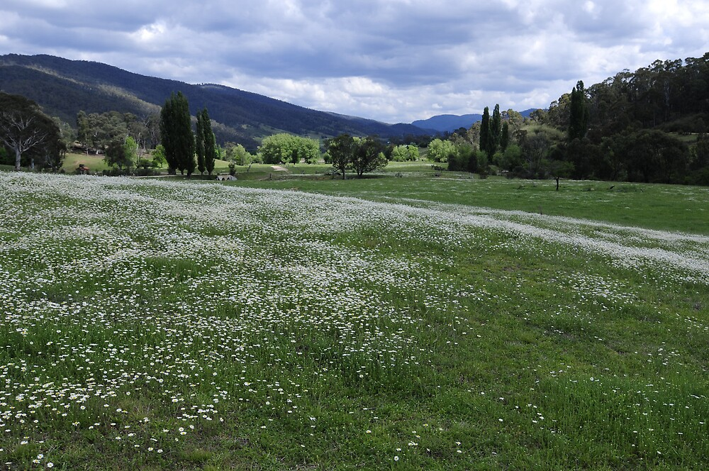 Spring flowers bloom in Brindabella Valley by Greg Long