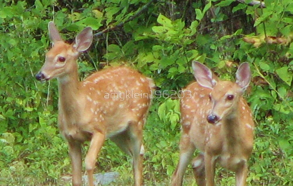 Fawns  by amyklein196203