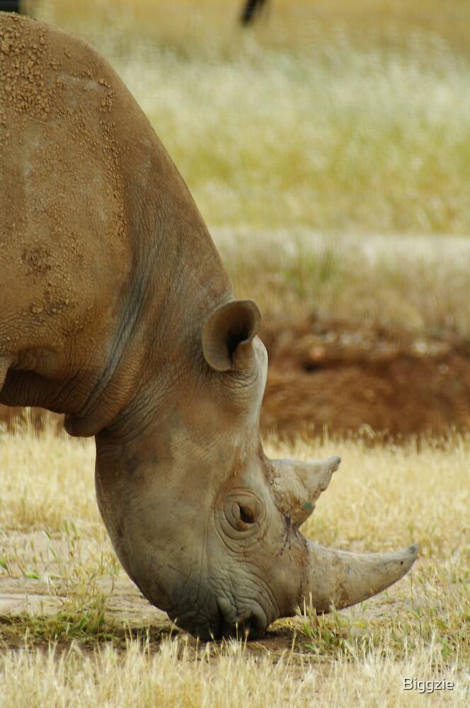 Black Rhino by Biggzie