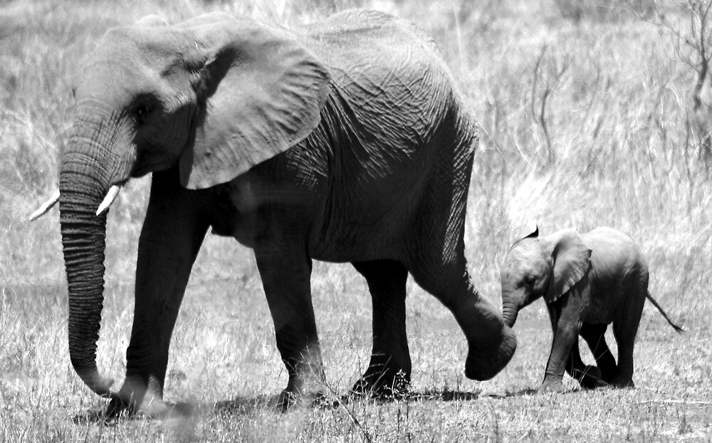 Elephant Mother and Calf - Northern Kruger National Park, South Africa by Louw Agenbag